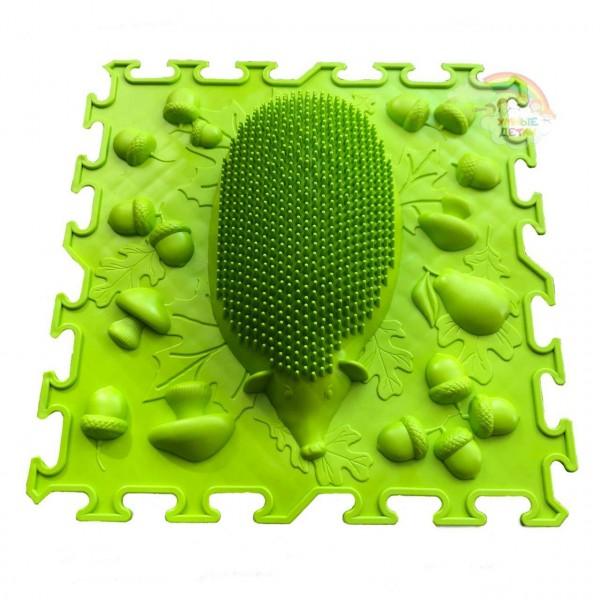 Ежик зелёный Ортокидс