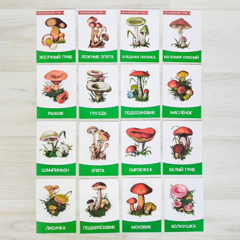 Обучающие карточки Грибы, 16 штук